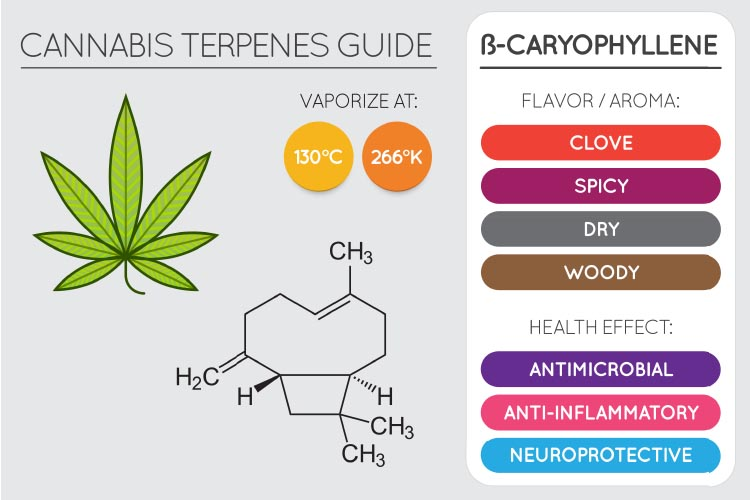 terpenes for pain 2
