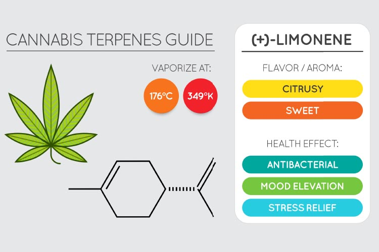 terpenes for pain 3