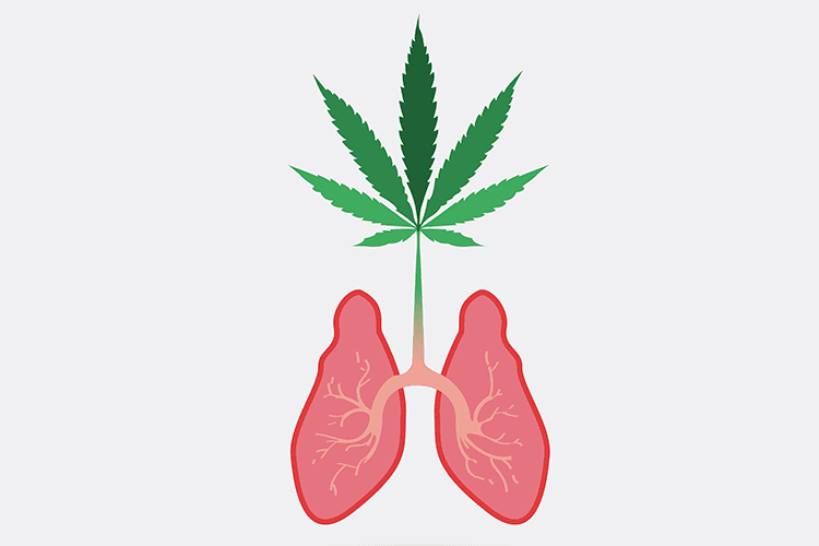 Pinene  lungs and cannabis