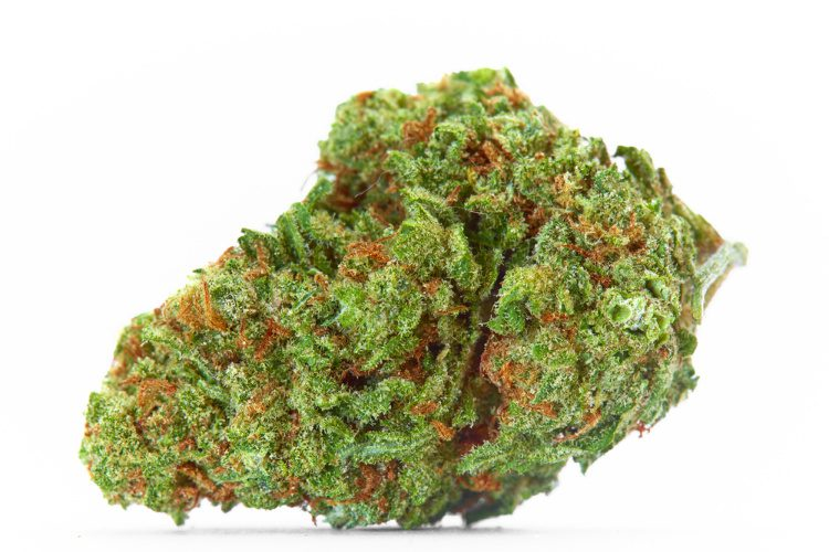 Strains for the Holidays 1