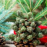 Strains for the Holidays